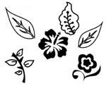 Florals & Nature