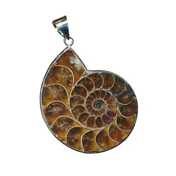 Ammonite Pendant 36x30mm