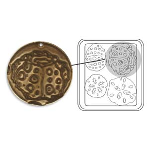 Vintaj Natural Brass - Sizzix DecoEtch Die - Sand & Sea